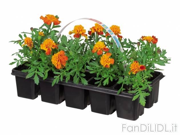 Piantine da giardino fiori fan di lidl for Piantine da esterno