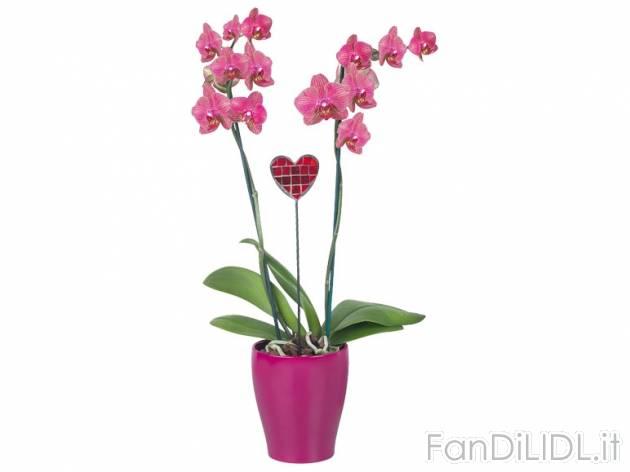 Orchidee in vaso fiori fan di lidl - Vaso in gres per orchidee ...